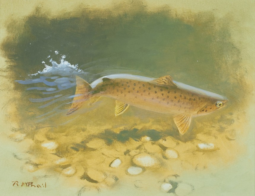 Rodger McPhail, Brown Trout