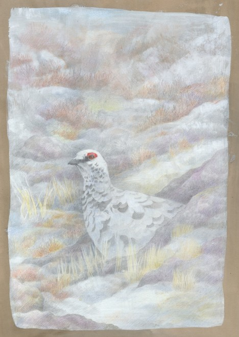 Emma Faull, Winter Ptarmigan