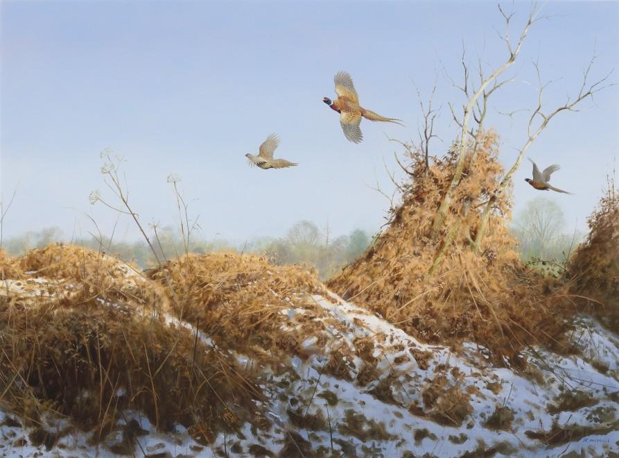 Rodger McPhail, Late season Pheasants