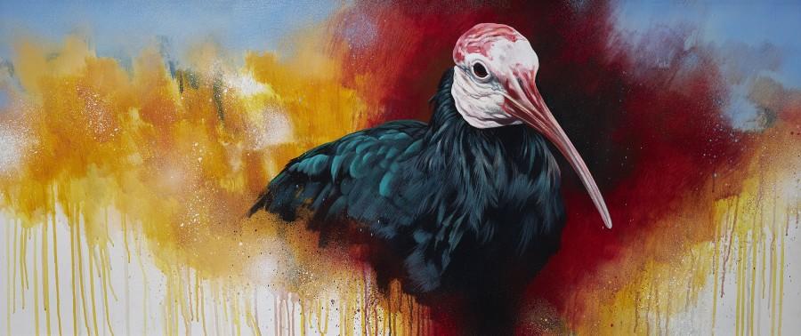 Jim Starr, Southern Bald Ibis study 2020