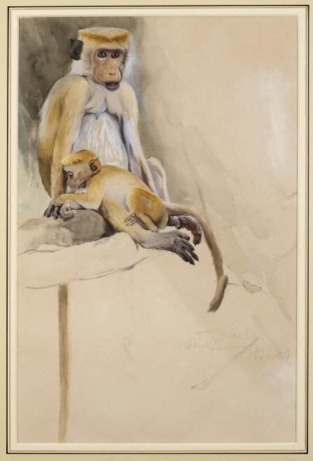 Wilhelm Kuhnert, Toque Macaque Monkey, with young