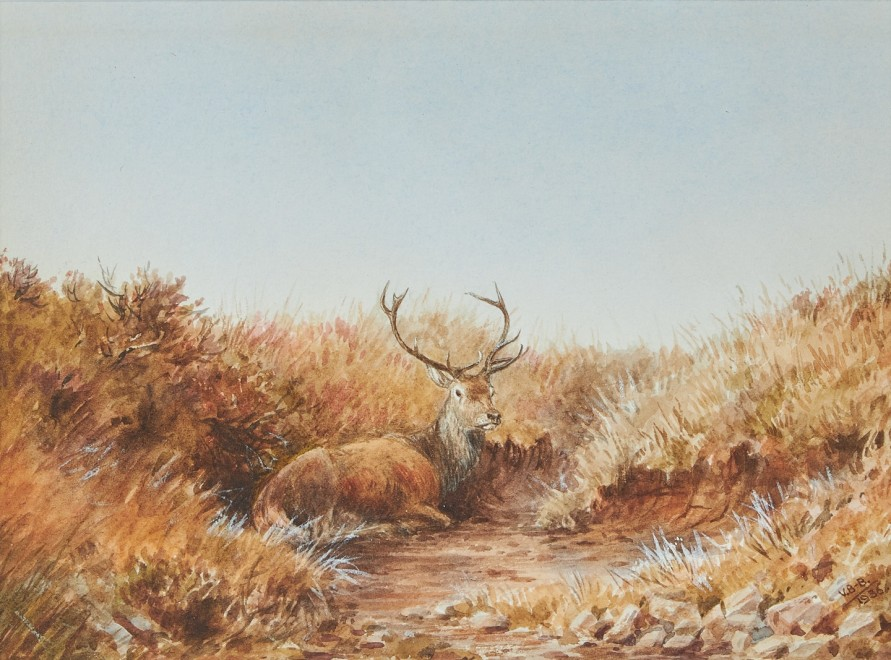 Vincent Balfour-Browne, 'The eleven pointer in the Peat Hag!'