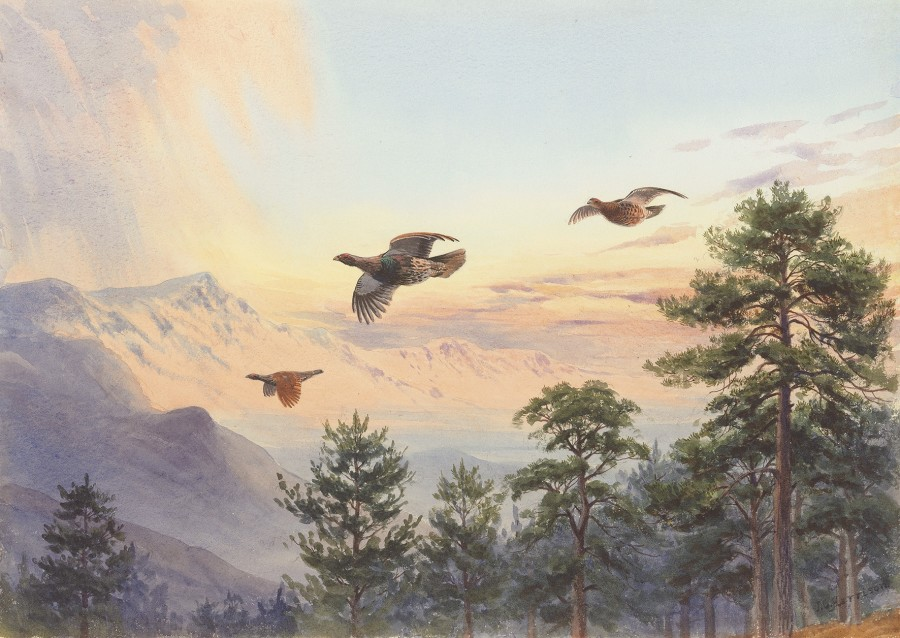John Cyril Harrison, The passing storm, Capercaillie