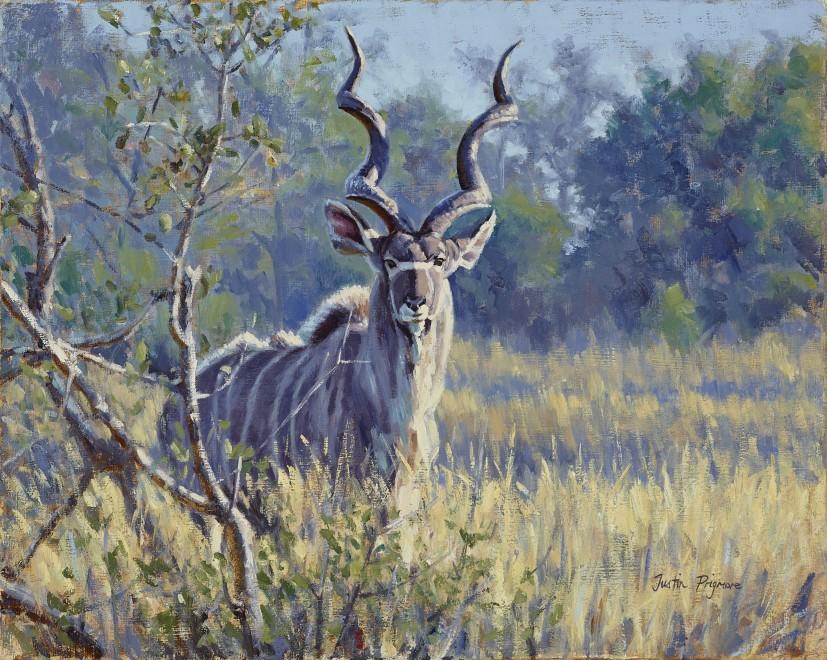 Justin Prigmore, Kudu bull