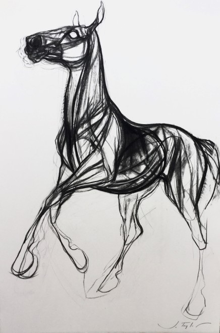 Jo Taylor, Storm horse