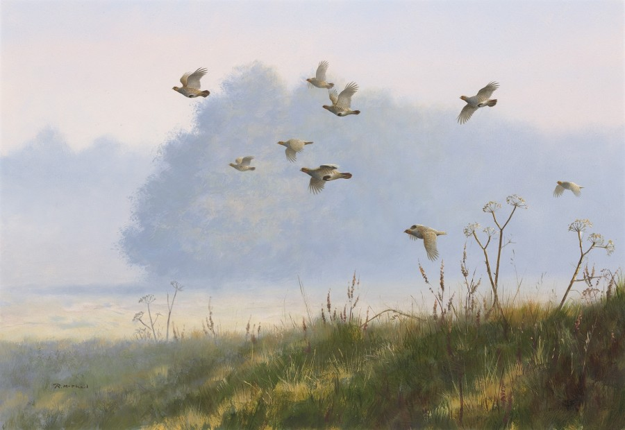 Rodger McPhail, Misty Partridges