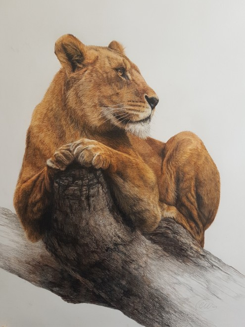 Charlotte J Williams, On Pause - Lioness