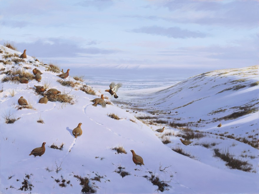 Rodger McPhail, A pack of Grouse