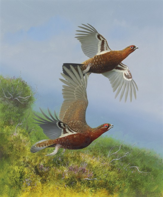 Rodger McPhail, Two grouse
