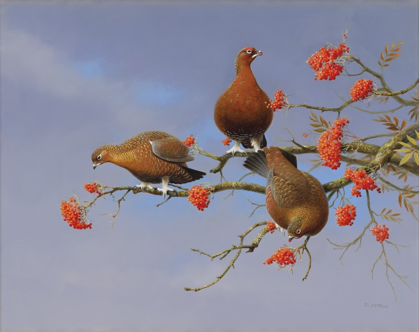 Rodger McPhail, Grouse and berries