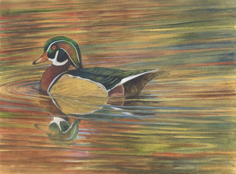 Emma Faull, Wood Duck