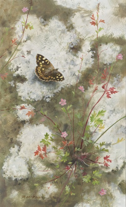 Rodger McPhail, Speckled Wood