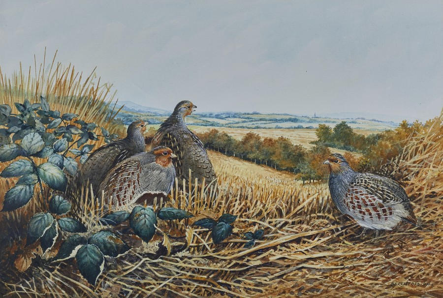 Berrisford Hill, Partridge in a stubble field