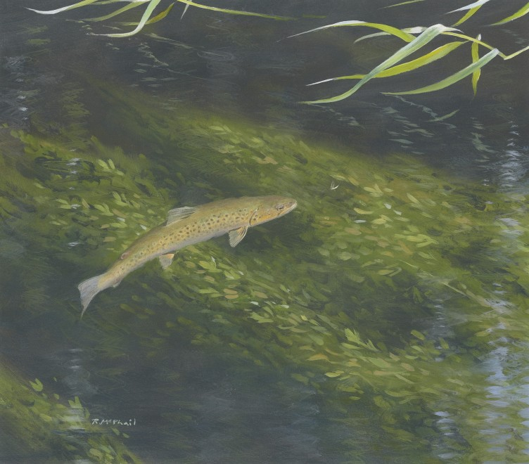 Rodger McPhail, Rising trout