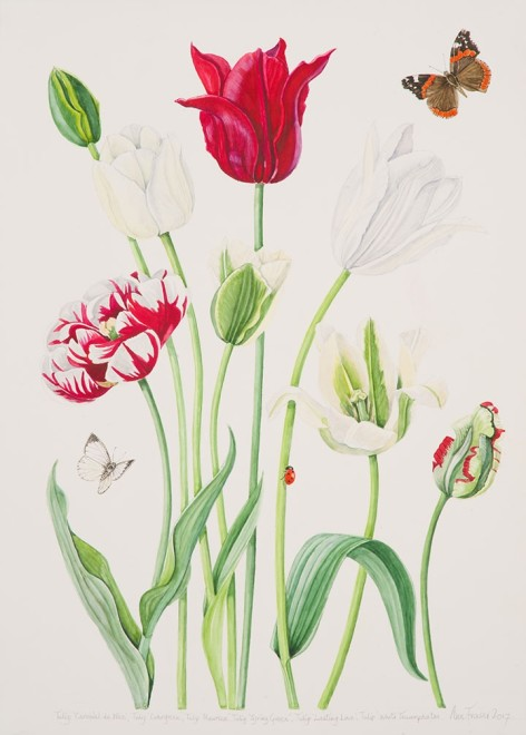 Ann Fraser, Red & White Tulips with Red Admiral Butterfly