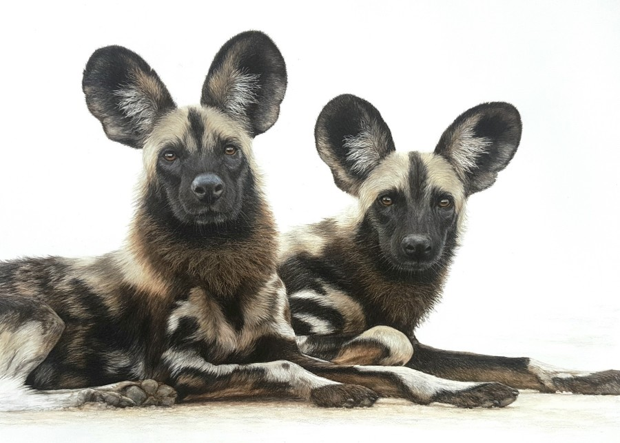 Charlotte J Williams, We're all ears - Wild Dogs