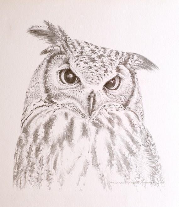 David Ord Kerr, Indian Eagle Owl Sketch