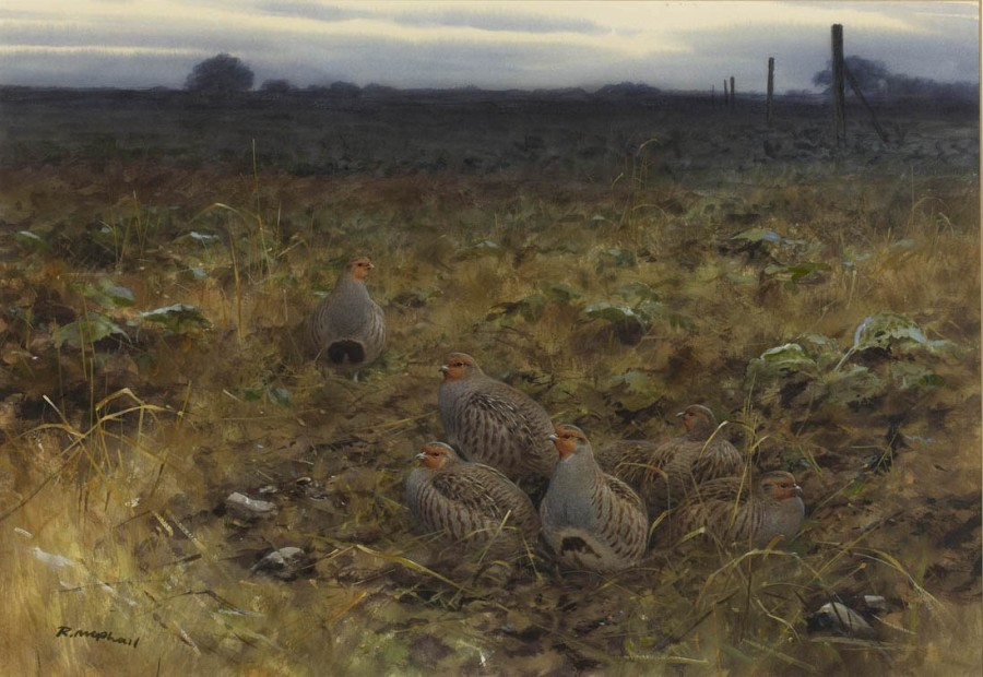 Rodger McPhail, Partridges
