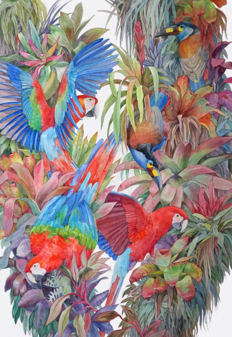 Emma Faull, Red and Green Macaws