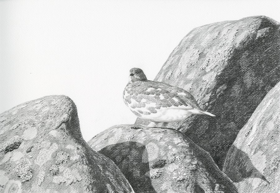 Chris Rose, Spring Ptarmigan