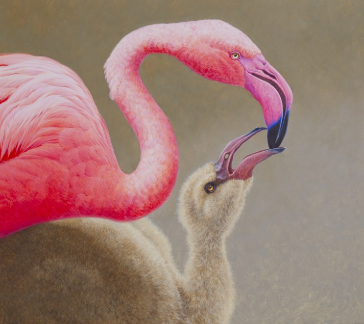 David Ord Kerr, Greater Flamingo