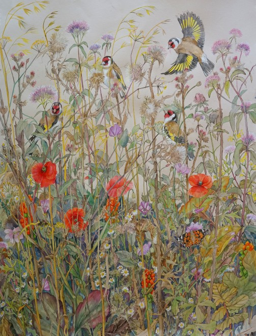 Emma Faull, Goldfinches with Painted Lady in a summer meadow