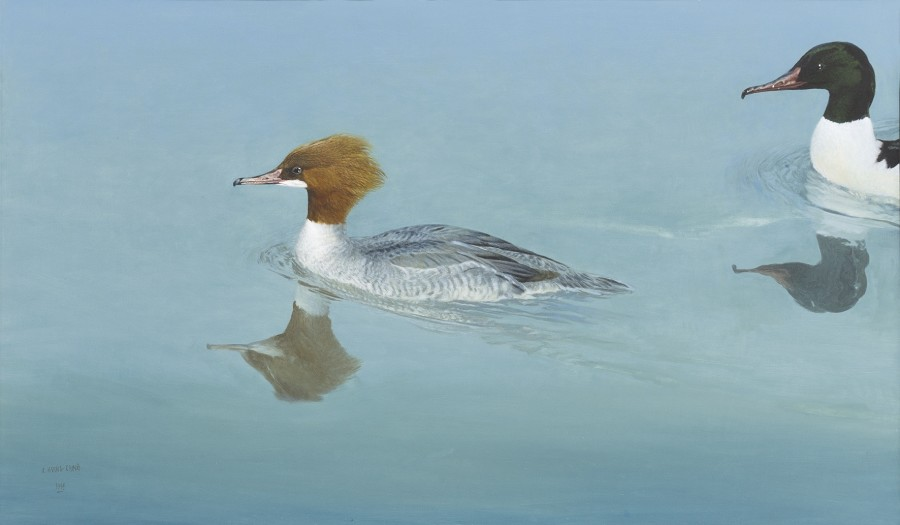 Ray Harris Ching, Goosanders