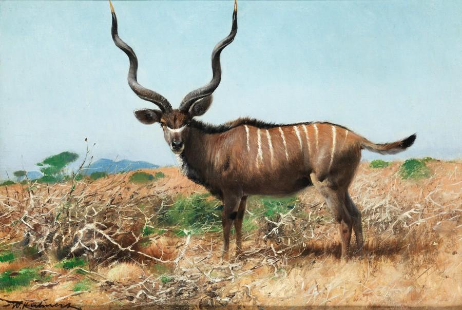 Wilhelm Kuhnert, Kudu