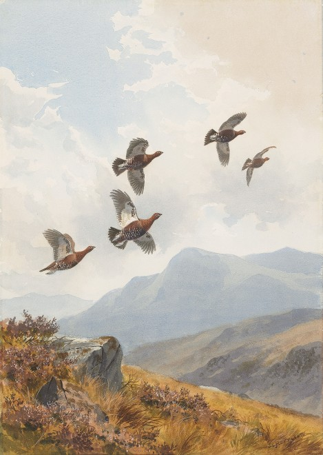John Cyril Harrison, Flushed on the hillside, Grouse