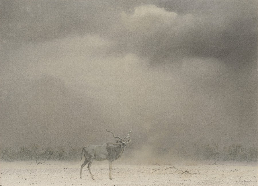 Kim Donaldson, Kudu Bull, Etosha, Namibia