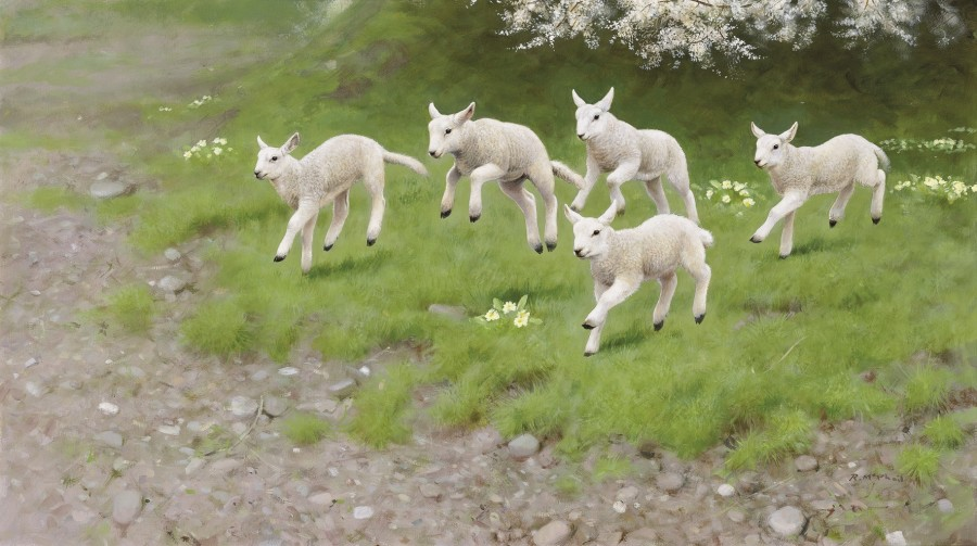 Rodger McPhail, Spring Lambs
