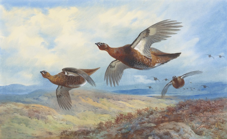 Archibald Thorburn, Grouse in flight