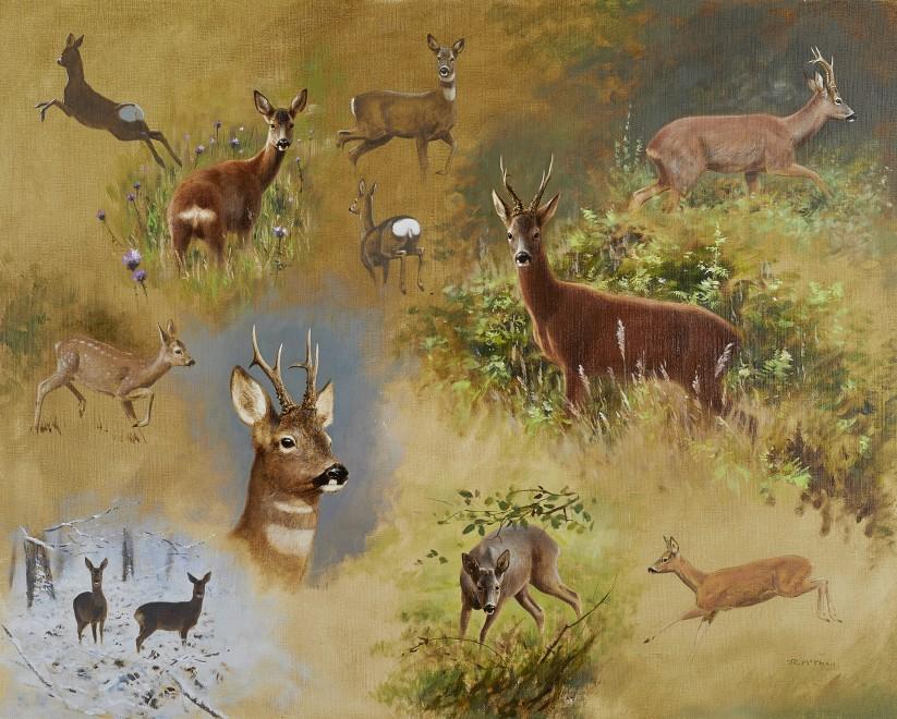 Rodger McPhail, Deer studies