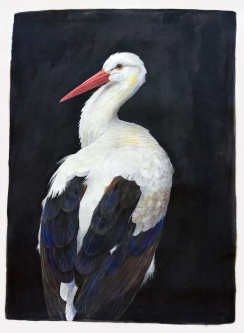 Emma Faull, White Stork