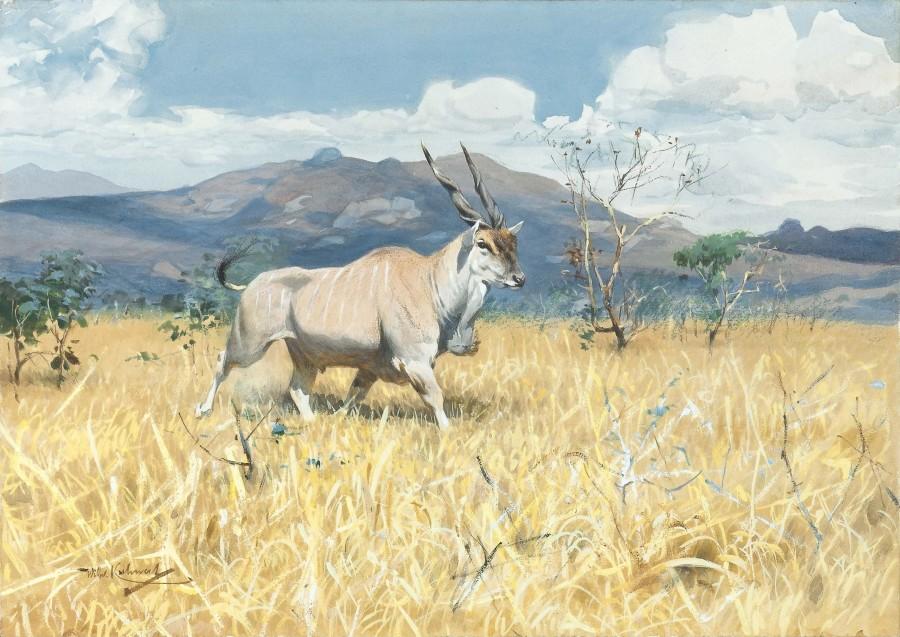 Wilhelm Kuhnert, Eland Antelope