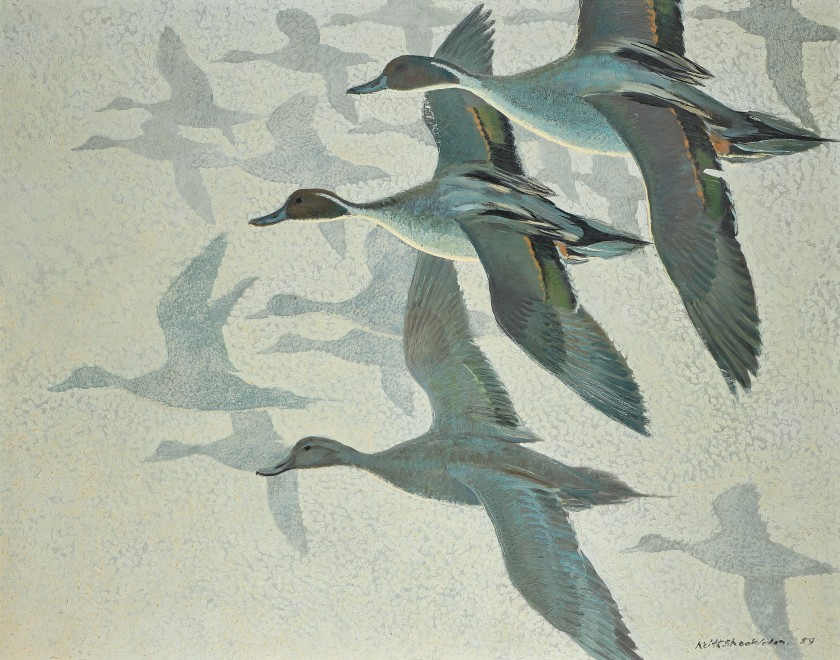 Keith Hope Shackleton MBE, Pintails in mist, 1959