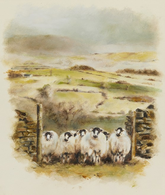 Mandy Shepherd, Sheep