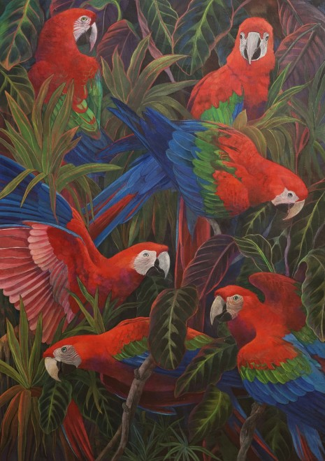 Emma Faull, Red and Green Macaws on black ground