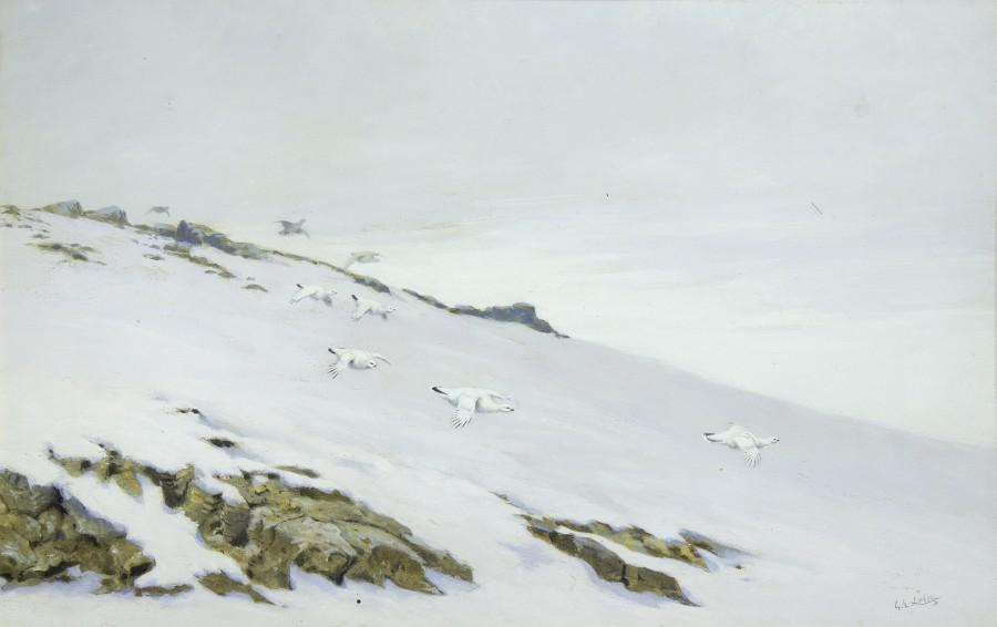George Edward Lodge, Ptarmigan in snow