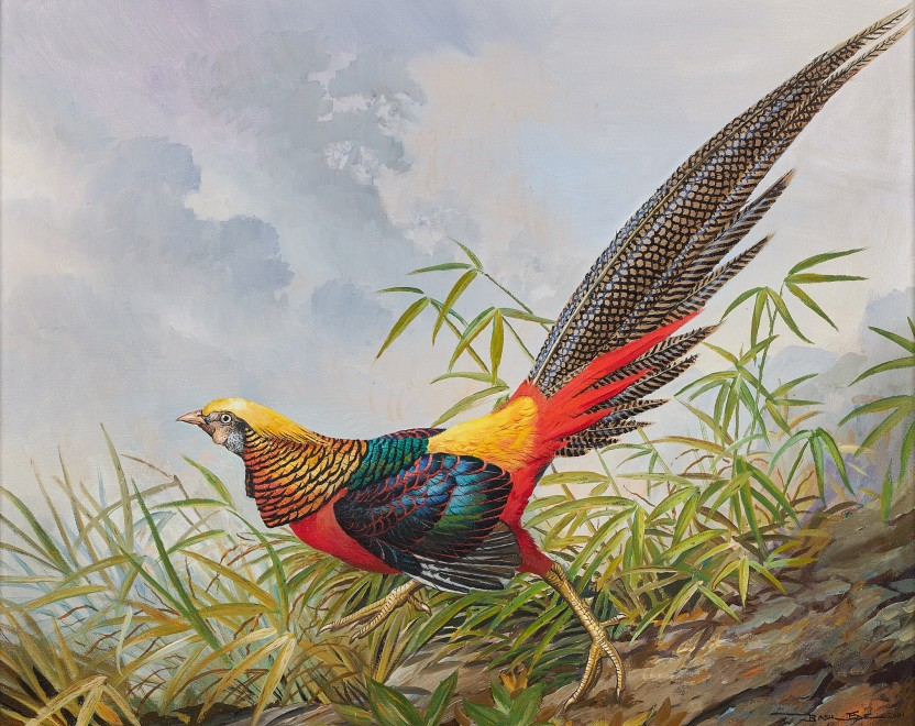 Basil Ede, Gold Pheasant