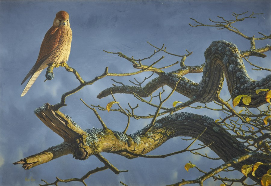 Chris Rose, Storm coming - kestrel