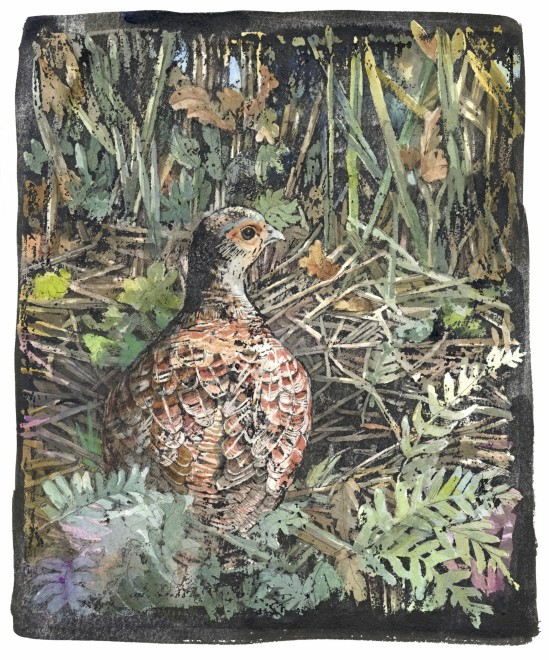 Emma Faull, Grey Partridge
