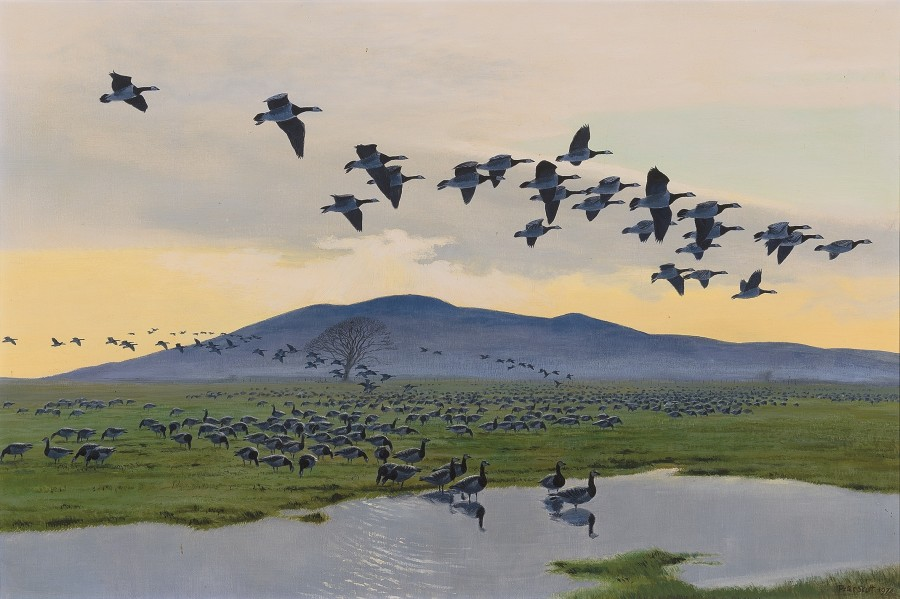 Sir Peter Markham Scott, Barnacle Geese at Caerlaverock on the Solway Firth