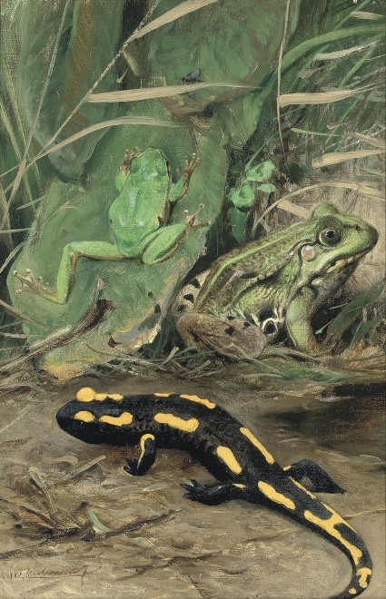 Wilhelm Kuhnert, A Tree Frog, Water Frog and Fire Salamander