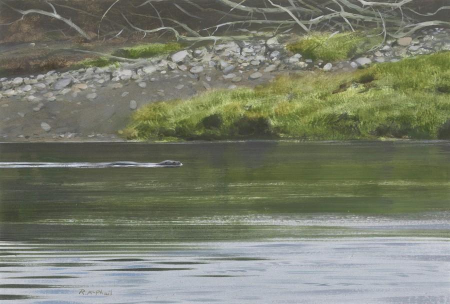 Rodger McPhail, Otter
