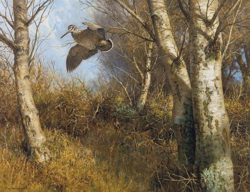 William Hollywood, Woodcock in flight