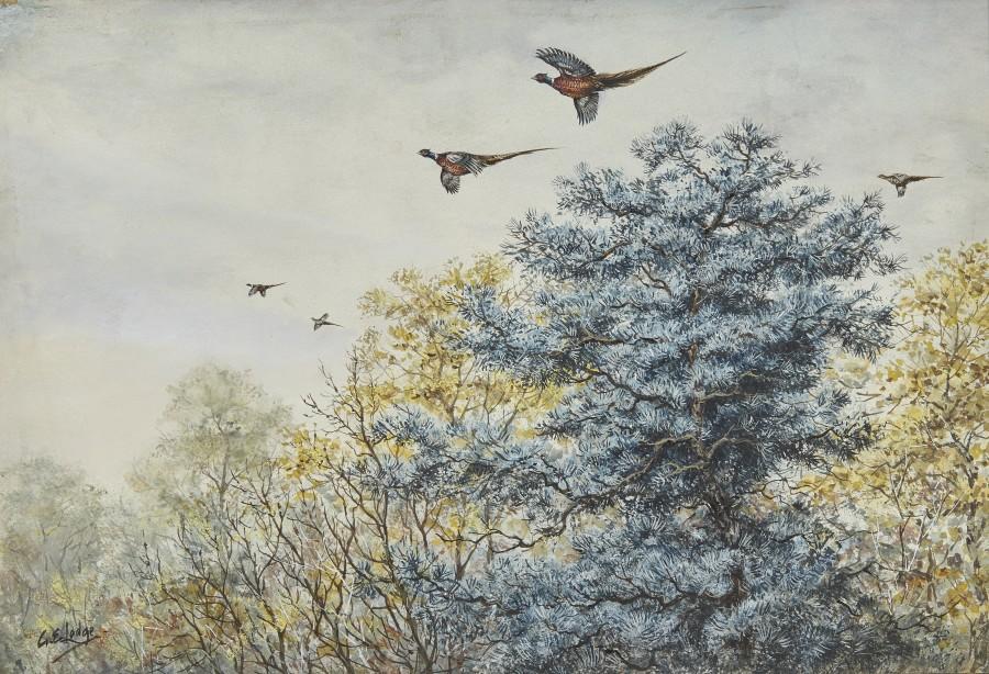 George Edward Lodge, High Pheasant