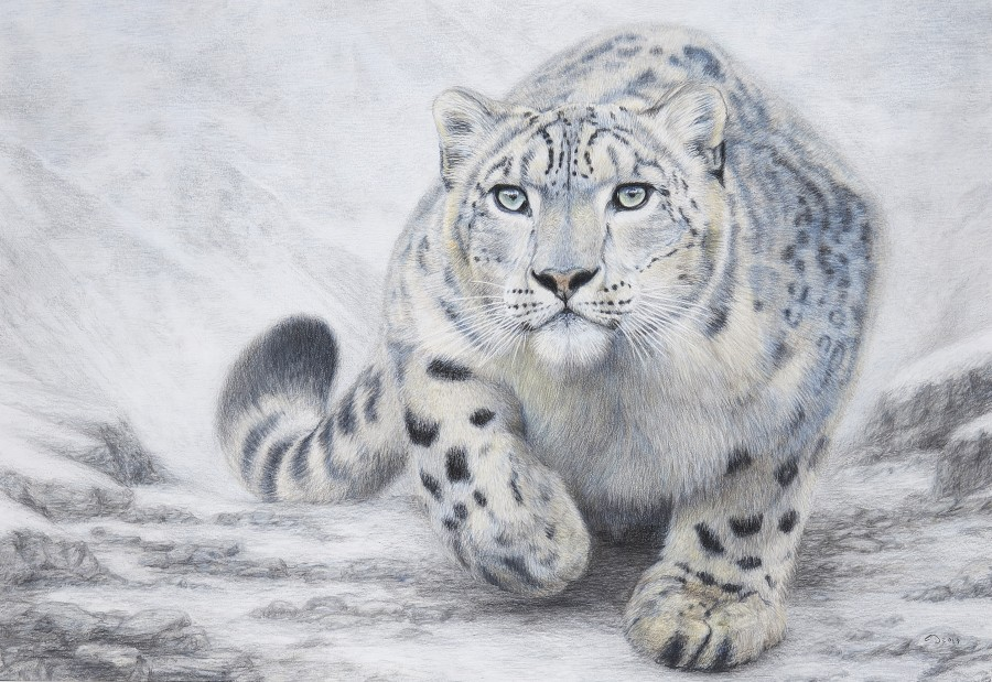 Charlotte J Williams, Snow Leopard - on silent paw