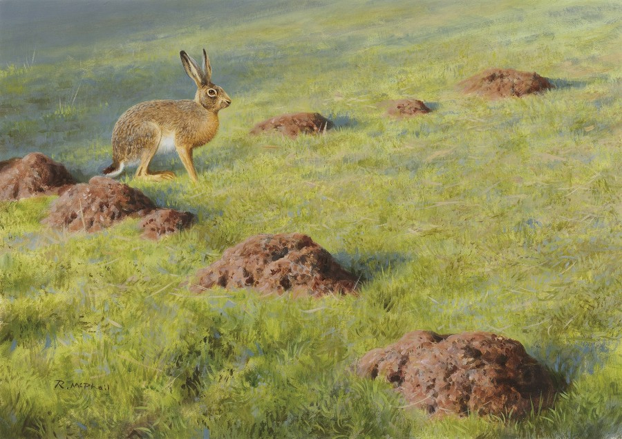 Rodger McPhail, Hare