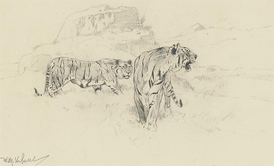 Wilhelm Kuhnert, Tigers